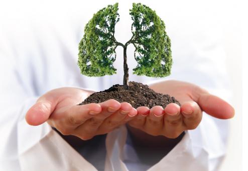 Quelle plante pour nettoyer et tonifier ses poumons ? Comment purifier ses bronches naturellement ?