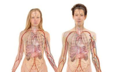 Bonnes applications pour apprendre l'anatomie : notre comparatif