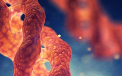 Quelle est la différence entre peptides de collagène et collagène hydrolysé